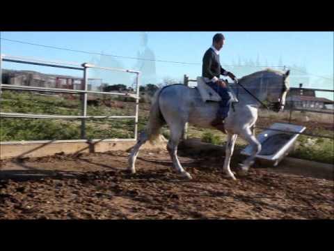 Asociation Aktion Gremlin , E.V., Pferde in Not aus ...
