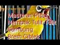 Masteran Pleci Tulit Tulit Sambung Brem Ciblek Ngotot Geter Geter Pcmi Chapter Kendal  Mp3 - Mp4 Download