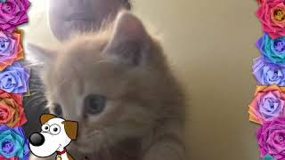 Животные! Короткое видео.