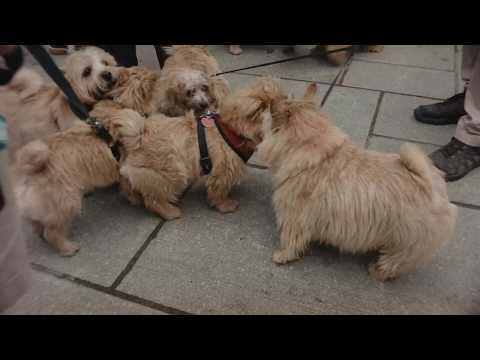 Norwich Terrier Meet Up