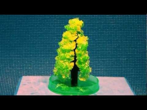 Magic Crystal Christmas Tree - Time Lapse Photography