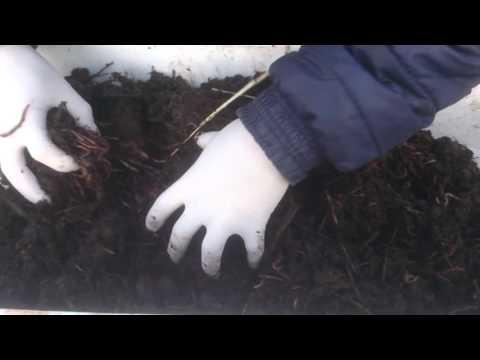 Красный калифорнийский червь маточное поголовье г.Запорожье