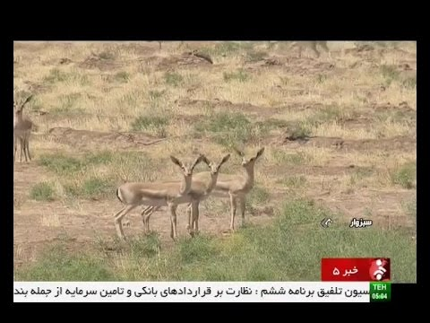 Iran Shir-Ahmad natural protected area, Sabzevar county منطق