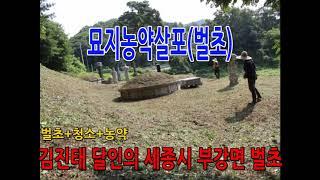 """김진태달인의 벌초대행""""(예약전화1577-7705)"""