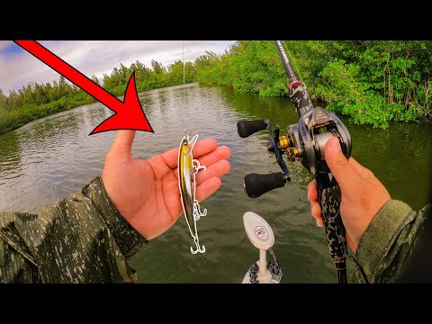 Bass Fishing Lure Catches A Ridiculous Amount Of Saltwater Fish!