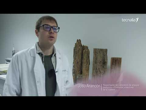 <p>Entretien avec Josu Arancón, responsable du laboratoire d&#8217;essais biologiques sur produits protecteurs du bois (espagnol)</p>
