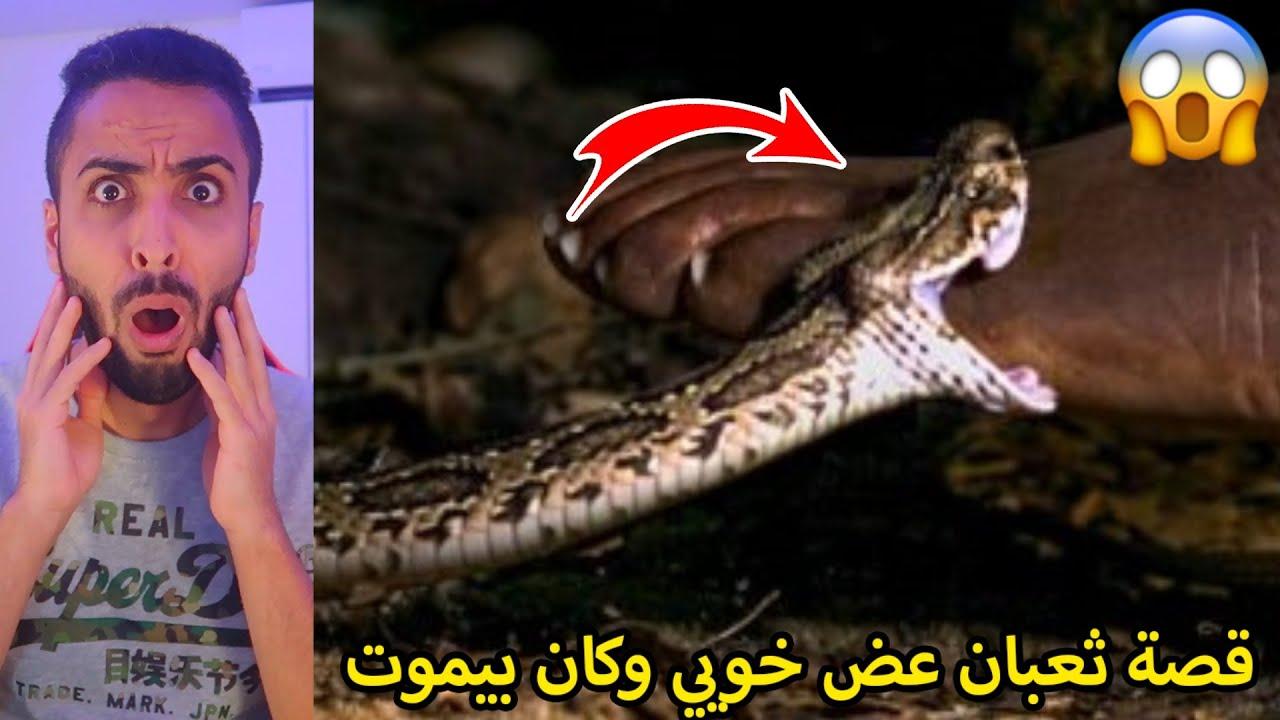 قصة مطاردة الذيب/خويي كان بيموت من سم الثعبان!!💔😢