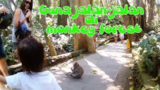Guna ketemu  monyet di Monkey Forest, Ubud  🐒  🐒  🐒  🐒  🐒  🐒  🐒  🐒  🐒  🐒  🐒  🐒