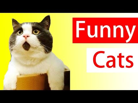 Hilarious Cat Videos  | Funny Cat Compilation – Try Not To Laugh