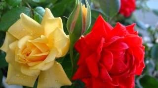 Hum Tum Yunhi Milte Rahen [Full Song] (HD) - Dilbar