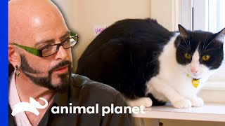 This Cat Owner Tests Jackson's Patience! | My Cat From Hell