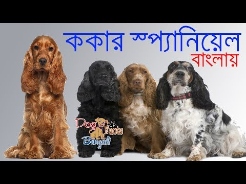 Cocker Spaniel dog facts in Bengali | Popular dog Facts | Dog Facts Bengali