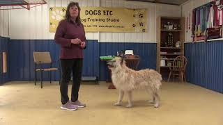 Teaching a KickBack (PopUp) Stand for Obedience and Rally