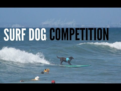 Petco Surf City Surf Dog Competition 2014