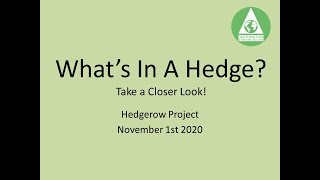 What is in a hedge?