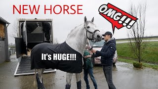 MY HUGE NEW STALLION ARRIVES
