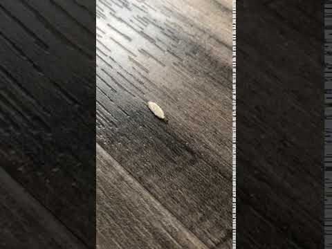 Plaster Bagworm crawling across the floor