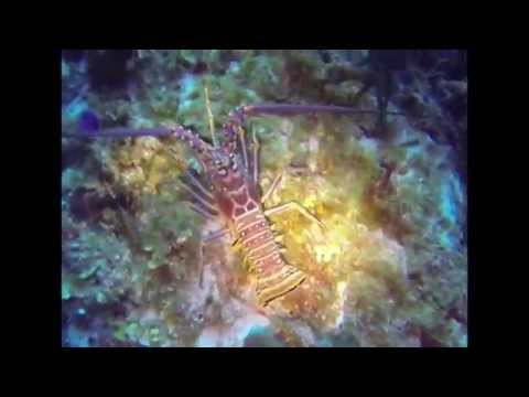 Cozumel, Mexico - go pro hero 3 Best Scuba Diving in the world