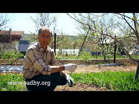 Отгиб веток: формирование кроны плодовых деревьев || Ландшафтный Дизайн ©