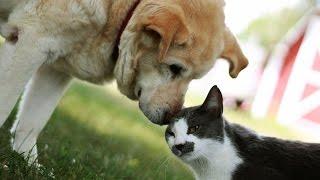 Коты и собаки пристают одни к другим