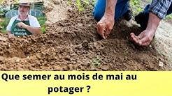 Que semer au mois de mai au potager ?