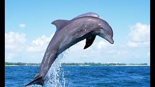 Морские животные для детей, дикие животные, развивающее видео для детей