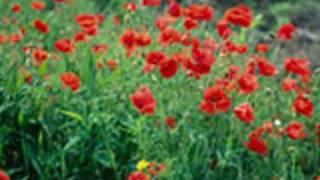 Polskie Kwiaty - Bayer Full thumbnail