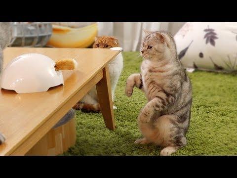 진짜 고양이 발인 줄 알고 싸다귀 날리는 고양이 소울이
