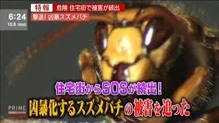 スズメバチ駆除茨城最強チーム(笑)