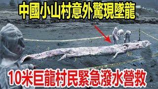 中國小山村意外驚現墜龍,10米巨龍村民緊急潑水營救,離奇內幕專家火速趕來!