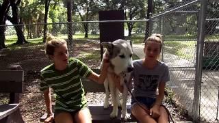 Hi To Husky Dog Training From Florida