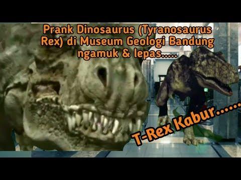 prank-dinosaurus-(tyranosaurus-rex)-di-museum-geologi-bandung-ngamuk-&-lepas........