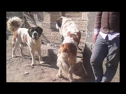 Dogs Market