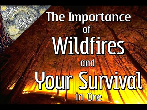The Importance of Wildfires and Your Survival in One feat. Nat Lopez | ALifeLearned