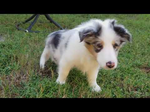 PuppyFinder.com : Puppies Playing