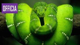 Красота Змей (Документальные фильмы Discovery HD) борьба животных