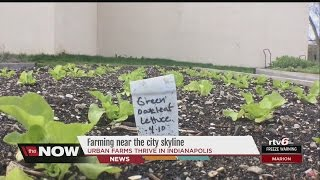 Farming the skyline: Urban farms continue to thrive in Indianapolis