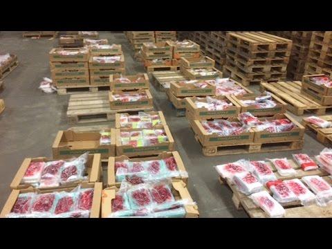 Antwerpen: Onderschepte partij cocaïne