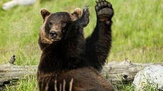 Из туалета сделаю себе берлогу! Решил медведь.(Медведь пришел на дачу и начал раскапывать туалет. Смотрите что было дальше. ОСТАЛЬНОЕ ИНТЕРЕСНОЕ И УВЛЕКАТ..., 2014-03-04T17:58:10.000Z)