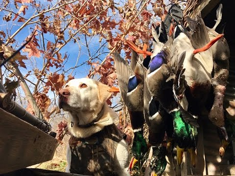 Everything About Duck Hunting & Gear
