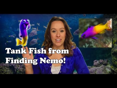 Finding Nemo Dentist Office Fish Tank Animals