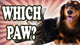 Dogs and Cats are Typically Right or Left Pawed — TodayIFoundOut