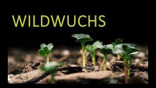 Wildwuchs - Tabu mit Stephanie Schmitz