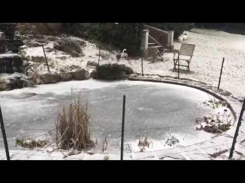 Frozen koi pond youtube for Koi pond freezing