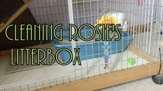 Cleaning Rosie's Litter Box