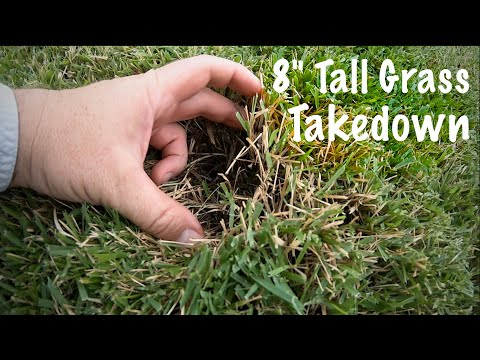 """Overgrown Lawn Mowing: 8"""" to 3.25"""" Scalped and Fertilized"""