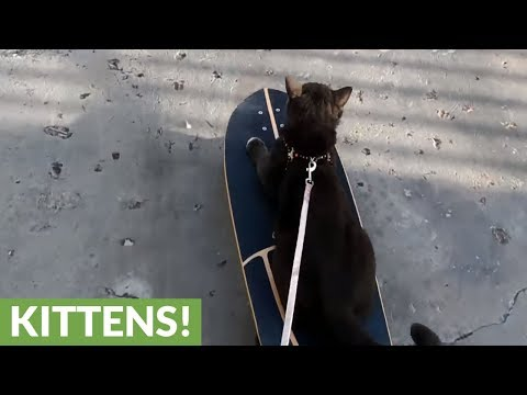 Tuxedo cat attempts to skateboard - is he a natural?
