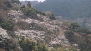吉川久子「谷戸の風・春 (第一楽章)
