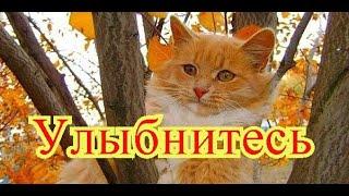 Смешные кошки. Позитив. Создай себе хорошее настроение
