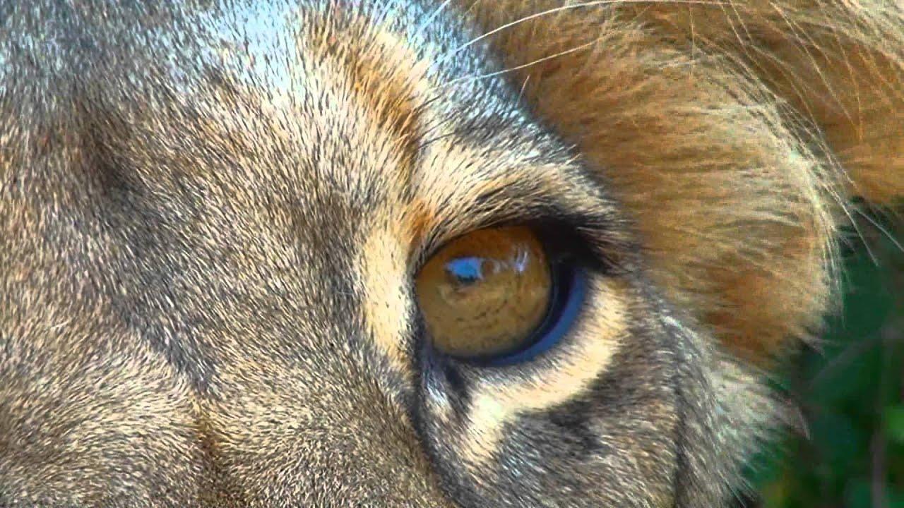 Kenya 3d animal kingdom imax official trailer youtube voltagebd Images